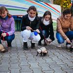 День хорька в Екатеринбурге, фото 41