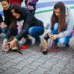 День хорька в Екатеринбурге, фото 43