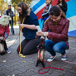 День хорька в Екатеринбурге, фото 45