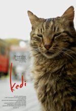 Кот. Обложка с сайта imagepost.ru
