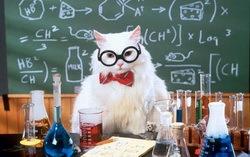 Кот в очках. Изображение с сайта theqoo.net