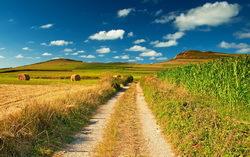 Лето в поле. Изображение с сайта blogspot.com