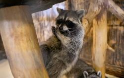 Три крутых контактных зоопарка Екатеринбурга