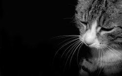Кот. Изображение с сайта w-dog.ru