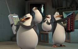 Кадр из фильма «Мадагаскар»
