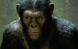 Кадр из фильма «Восстание обезьян»